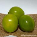 granita ingredients